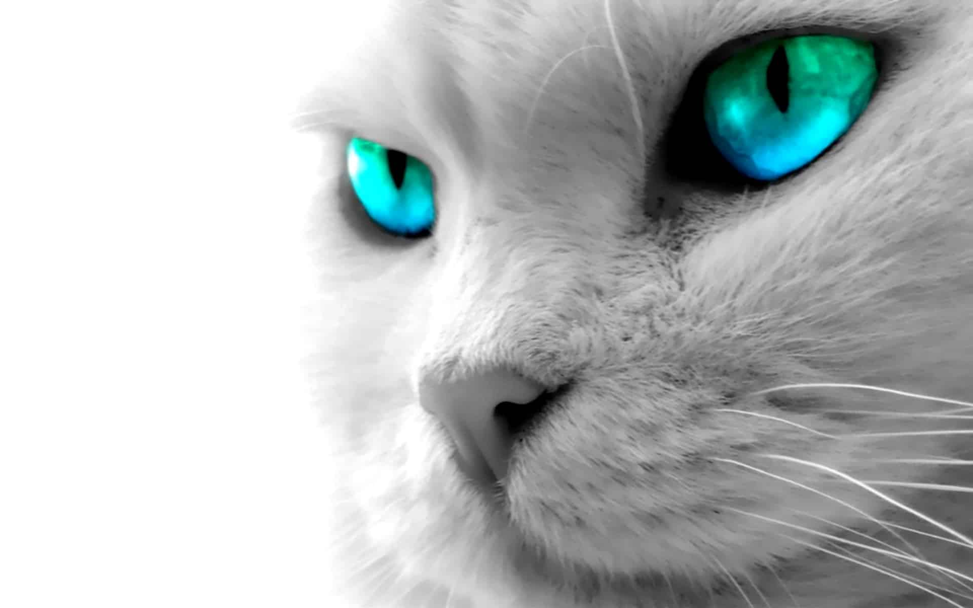 cool-animal-full-hd-wallpaper-b9d0ck